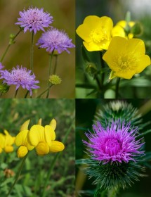 Native Wildflower Plug Plant Mix for Woods & Hedgerows