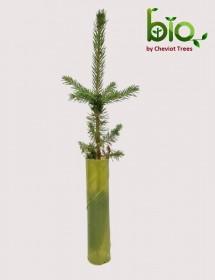 BIO Spiral Vole Guard (Green tint)