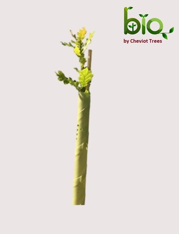BIO Spiral Guard (Green tint)