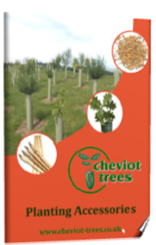 Cheviot Trees Brochure