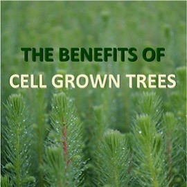Benefits of Cell Grown Trees
